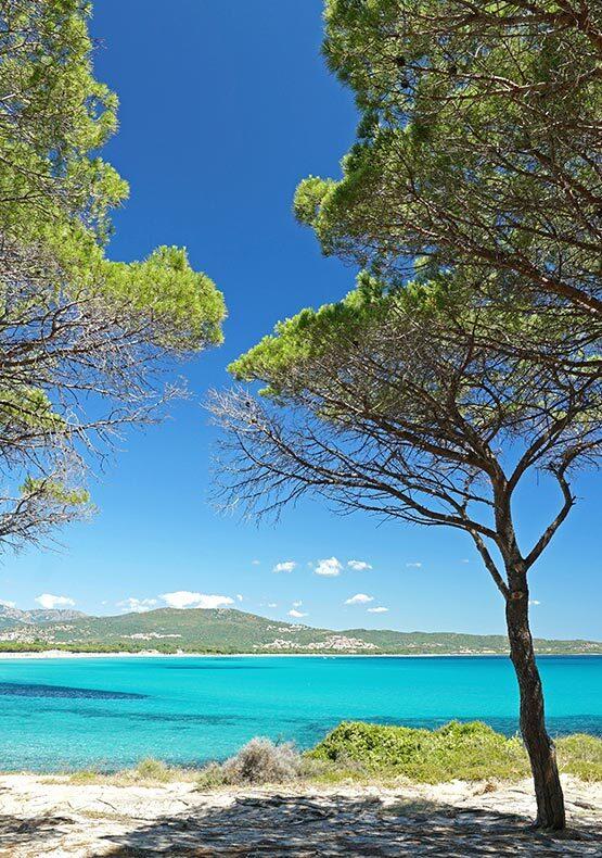 Scorcio di mare dalla pineta di Budoni (Sardegna)